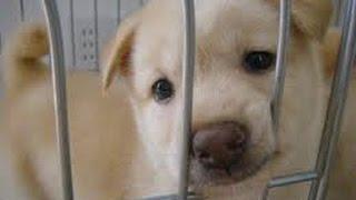 getlinkyoutube.com-【涙腺崩壊】この犬を殺してくれ