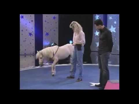 The World's Smartest Mini Horse - Pet Star Winner!