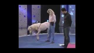 getlinkyoutube.com-The World's Smartest Mini Horse - Pet Star Winner!