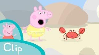 getlinkyoutube.com-Peppa Pig - Rock pools (clip)