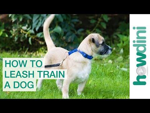 Leash Training a Puppy: How to Leash Train a Puppy