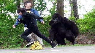 getlinkyoutube.com-Classic Gorilla In Real LIfe Prank