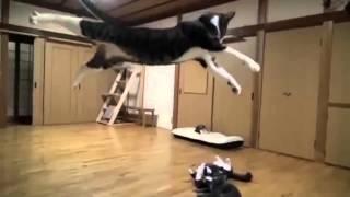 flushyoutube.com-Dog vs Cat Fight Very Funny