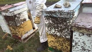 getlinkyoutube.com-apicultura    rapita 2014