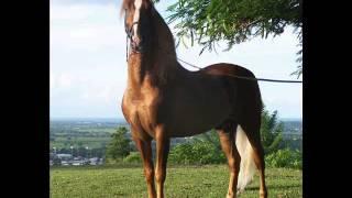 getlinkyoutube.com-Top de los caballos mas hermosos