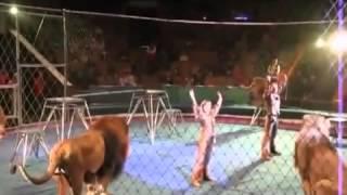 getlinkyoutube.com-Circus gone wrong crazy lions attack