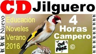 getlinkyoutube.com-CD Jilguero Chardonneret Goldfinch 4 horas verano 2016