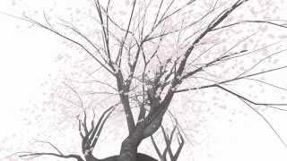 "getlinkyoutube.com-Cherry Blossom VR Cardboard ""Sakura"""