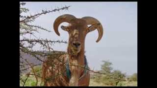 getlinkyoutube.com-Paysages du Sud, le Sahara sud-algérien