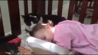 getlinkyoutube.com-قط يوقظ طفل صغير من النوم ويداعبه    والطفل مستمتع هههههه