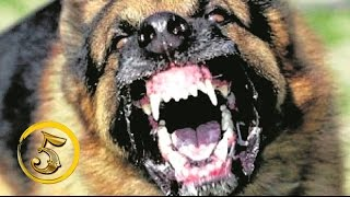 getlinkyoutube.com-Złota Piątka: Najbardziej agresywne psy świata!
