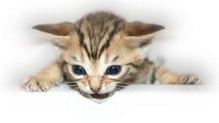 getlinkyoutube.com-Kitten falls off bed