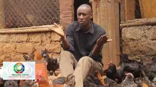 getlinkyoutube.com-Mkulima Young Champion - Former journalist Sh 800,000 kienyenji chicken empire