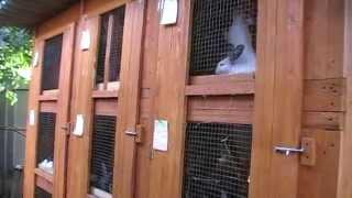 Мои кролики,клетка для кроликов,часть 2.