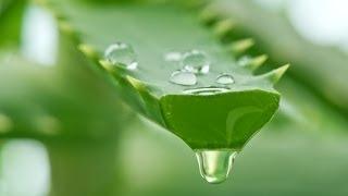 getlinkyoutube.com-Aloe Vera Gel Extraction
