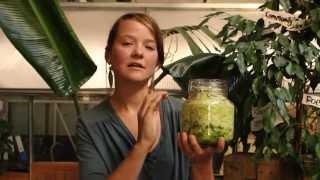 getlinkyoutube.com-How to make raw fermented sauerkraut / How to make live sauerkraut