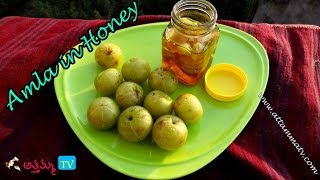 getlinkyoutube.com-How to Preserve Amla in Honey (Storing Amla for Months) | Life Hacks by Attamma TV