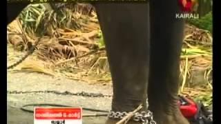 getlinkyoutube.com-E4 Elephant Uttoli Ayyappan