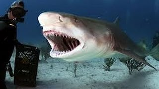 getlinkyoutube.com-رعب هجوم القرش الابيض على رجل الغوص