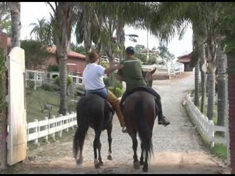 Mangalarga Marchador TV - programa 275