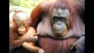 getlinkyoutube.com-Versuch nicht zu lachen 2:lustige Tiere