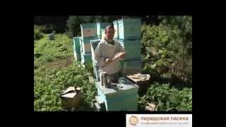 getlinkyoutube.com-ТОП 10. Советы Начинающему Пчеловоду