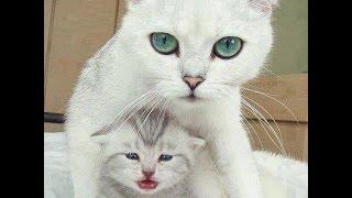 getlinkyoutube.com-قطة ترعب صغارها ولا تعرف السبب