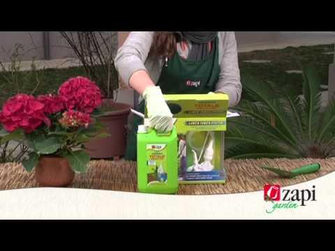 Come eliminare le erbe infestanti dal giardino fai da te mania - Eliminare topi dal giardino ...