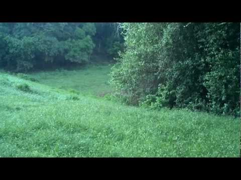 SOUNDSCAPE - Birds Chirping Along A Meadow - 040412