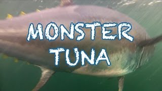 getlinkyoutube.com-MONSTER TUNA - 1000 pound Giant Bluefin caught in record time in PEI - Cool Underwater Shots