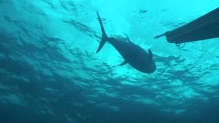 """getlinkyoutube.com-""""Pesca Sub na América Central"""" por Diego Santiago"""