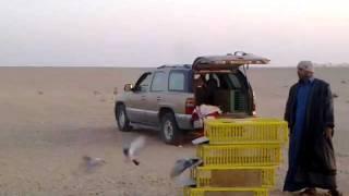 getlinkyoutube.com-الاتحاد الكويتي لسباق الحمام سباق ال 700 كيلو