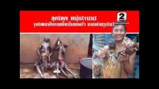 getlinkyoutube.com-สุดโหด! หนุ่มใจบาป จุดไฟเผาลิงตายทั้งเป็นยกครัว แถมถ่ายรูปโชว์ สดใหม่ไทยแลนด์ ช่อง 2