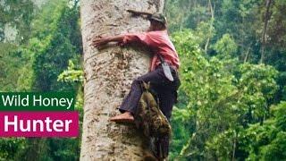 getlinkyoutube.com-Săn Mật Ong Rừng - Nghề nguy hiểm (Wild Honey Hunters)