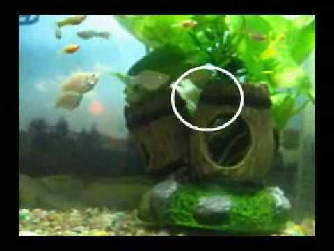 公球魚的追逐