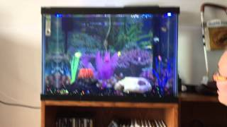 getlinkyoutube.com-12 Fish in A 20 Gallon Aquarium?... Yes It Can Work!
