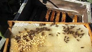 getlinkyoutube.com-Ошибки пчеловода! ( наращивание пчелы в зиму и сила семье осенью - часть 1 )