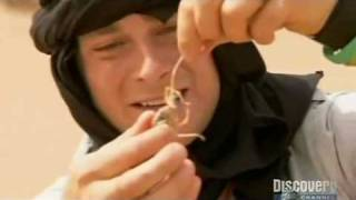 getlinkyoutube.com-Bear Grylls Eats Giant Camel Spider