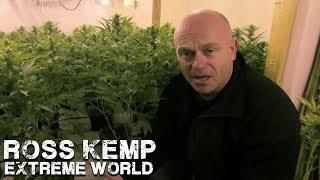 getlinkyoutube.com-London Cannabis Farm | Ross Kemp Extreme World