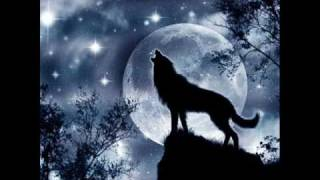 getlinkyoutube.com-Wolf Like Dog
