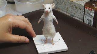 getlinkyoutube.com-Mouse Taxidermy Tutorial by Le Heart Design