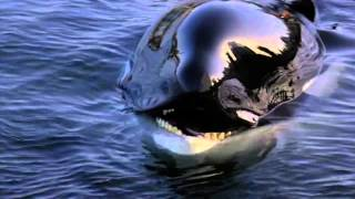 getlinkyoutube.com-Michael Jackson - Will You Be There (Free Willy)