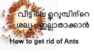 getlinkyoutube.com-ഉറുമ്പിനെ എങ്ങനെ ഇല്ലാതാക്കാം/Several natural  ways to get rid of Ants/No.148