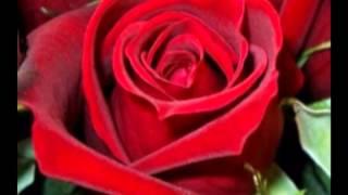 getlinkyoutube.com-กุหลาบแดง 9,999 ดอกเป็นสื่อ มิตรภาพแห่งรัก 9,999 red roses as a fellowship of love .