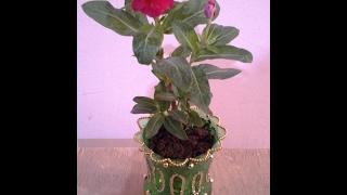getlinkyoutube.com-Best Out Of Waste Plastic Bottle Decorative Table top Plant Holder