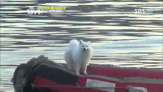 getlinkyoutube.com-TV 동물농장 467회_02