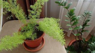 getlinkyoutube.com-Мои комнатные растения.Комнатные цветы.