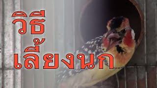 ฟาร์มนก I.S.Beauty Bird