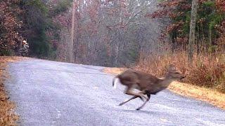 getlinkyoutube.com-Management Deer Hunt at the White Hall Hunt Club! 12-20-2014
