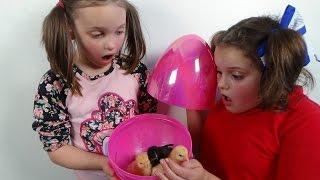 "getlinkyoutube.com-Surprise Eggs Baby Chicks ""Annabelle Victoria Rex Toy Freaks Egg Style"""